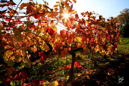 tout_art_image_domaine_viticole